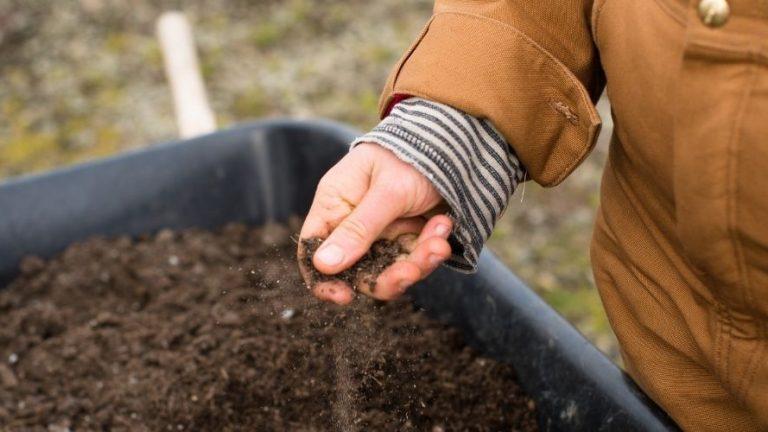 Bonus operai agricoli 2021. Cos'è e come richiederlo con SPID